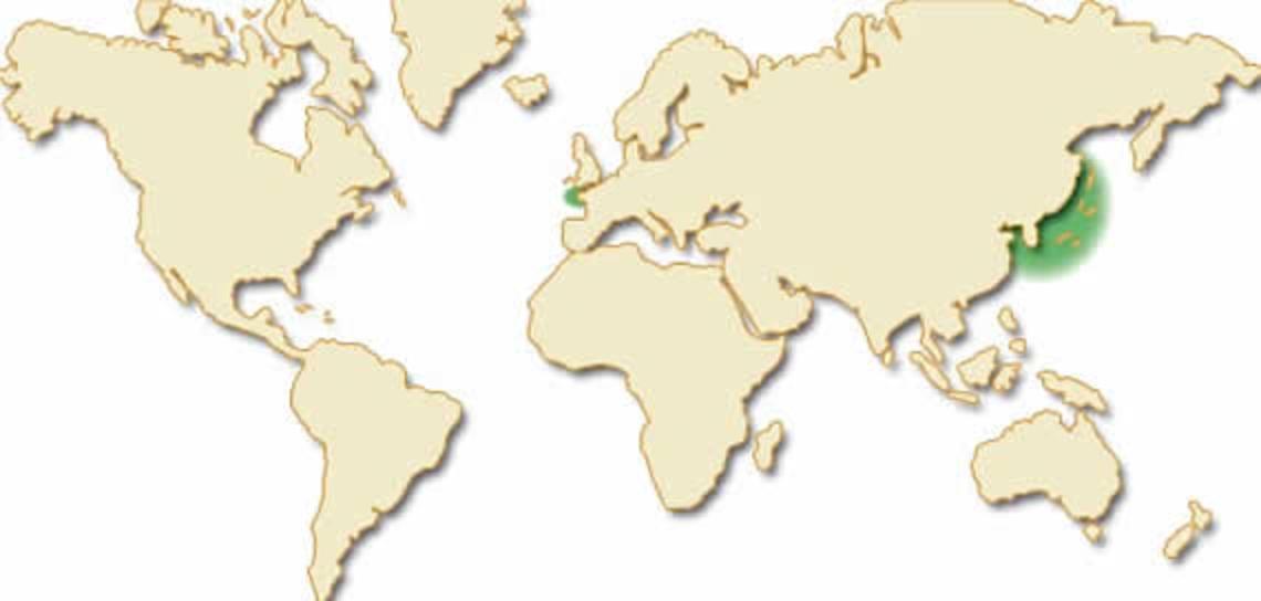 Carte mondiale undaria