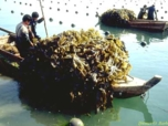 Accueil Vegetaux aquatiques